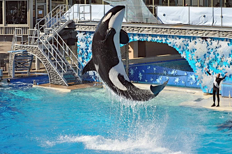 Seaworld ending orcas breeding program